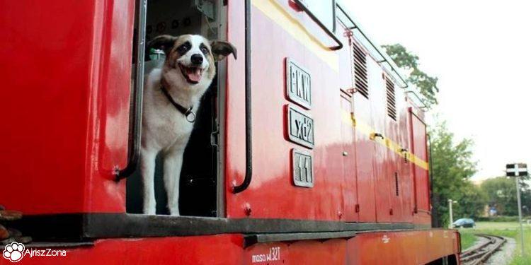 kolej wąskotorowa w Parku Śląskim z psem