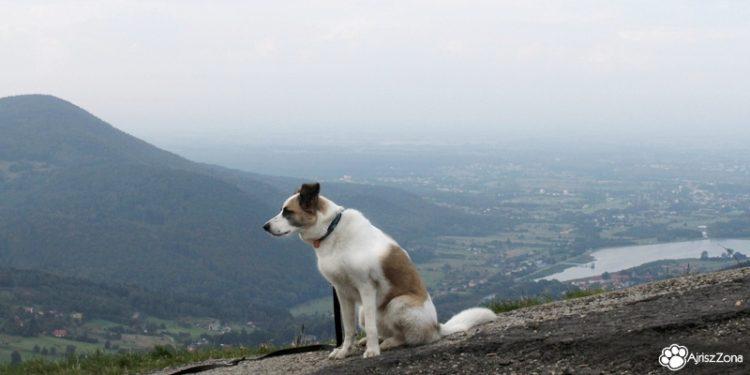 Weekend z psem w Beskidach