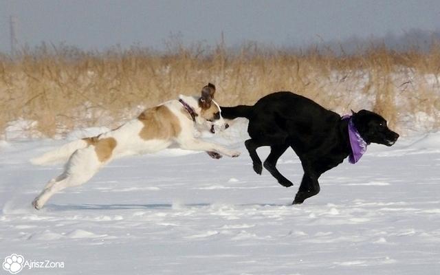 zimowe spacery z psami