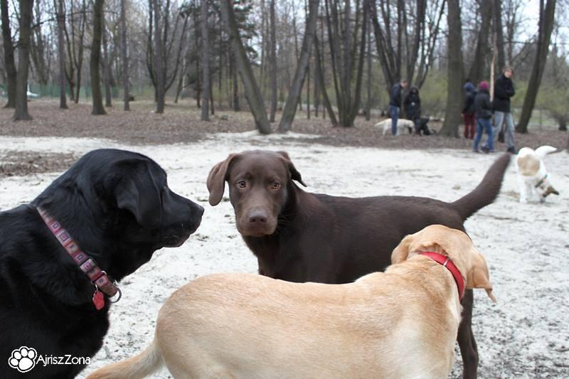 Po I wiosennym spotkaniu na Wybiegu dla psów