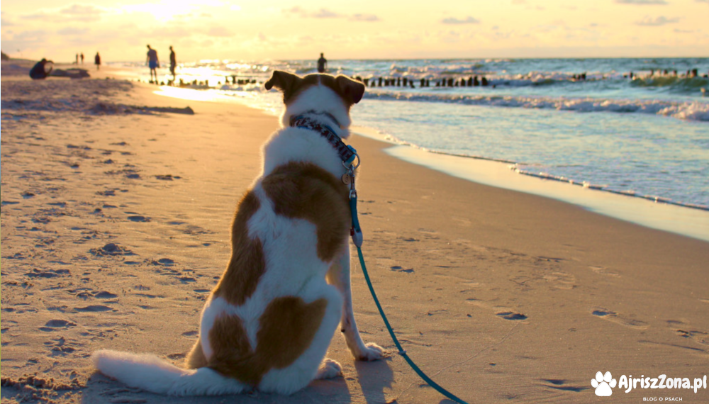 morze z psem debki polska