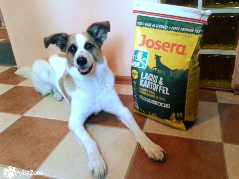 karma bezzbożowa dla psa