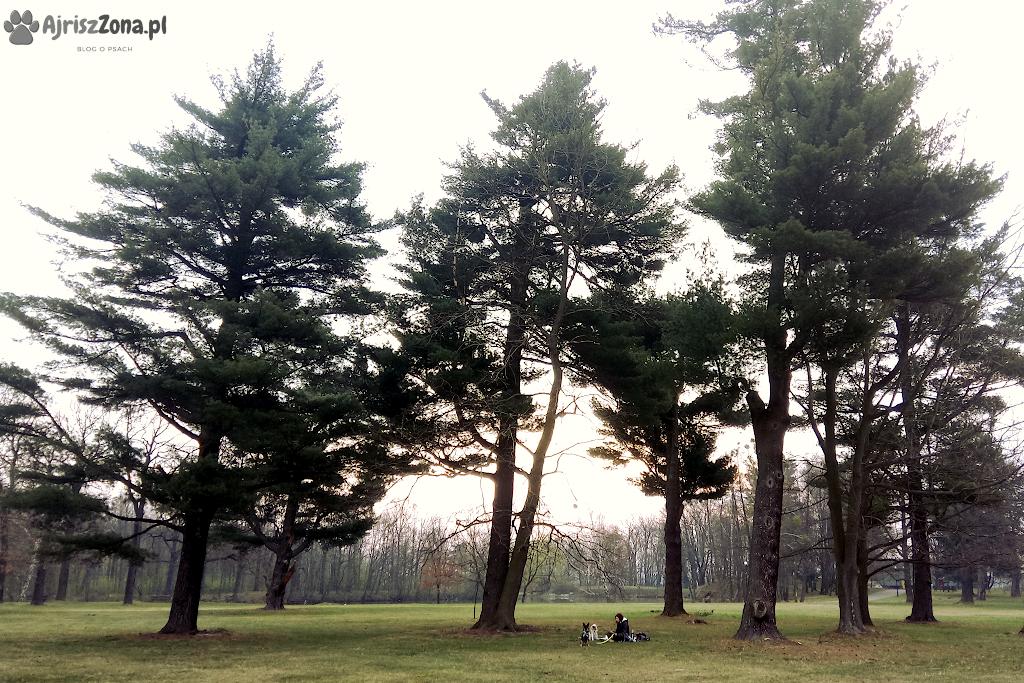 Spacery z psem w Świerklańcu - Park Świerklaniecki