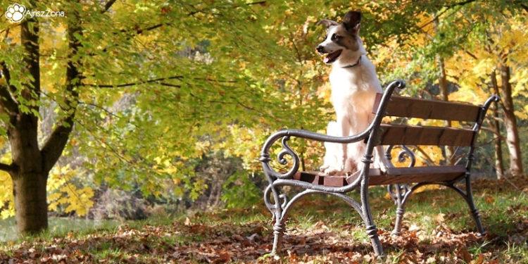 Spacery z psem w Świerklańcu