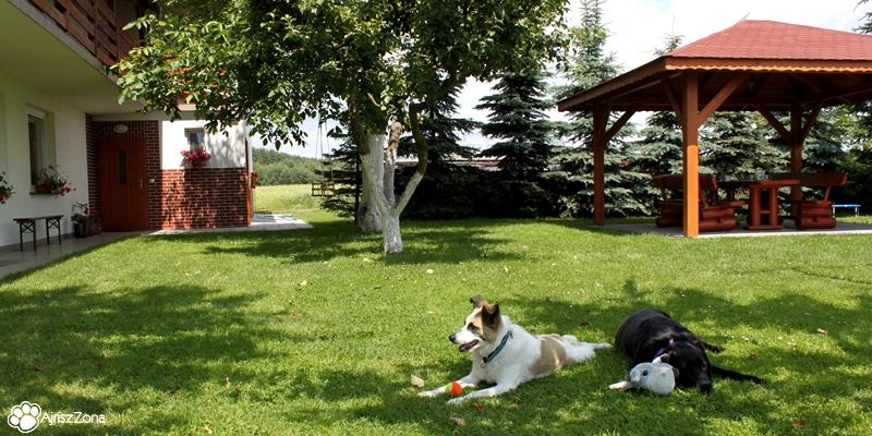 Agroturystyka z psem Radawie