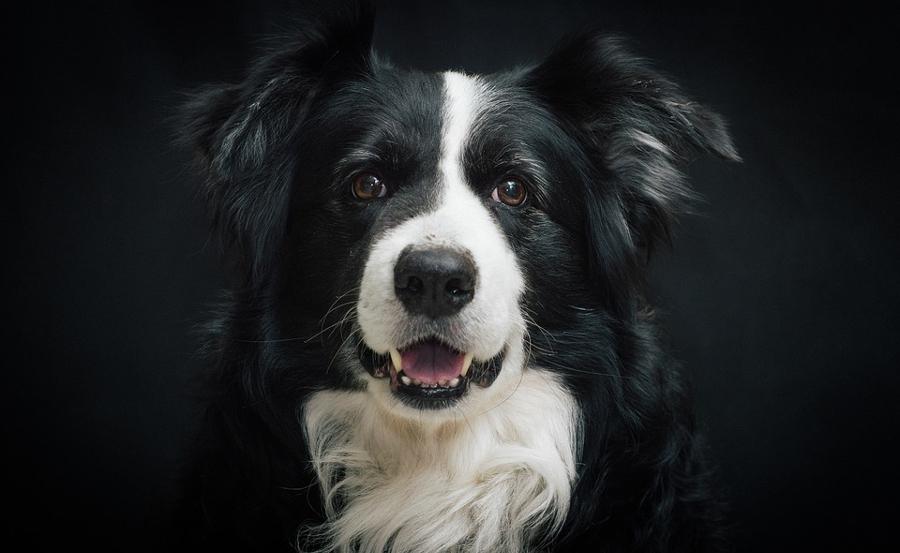 Profesjonalna sesja fotograficzna psa