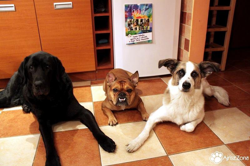 Kalendarz charytatywny fundacji pomagającej bezdomnym psom
