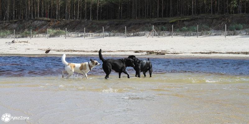Morze z psem Piaśnica