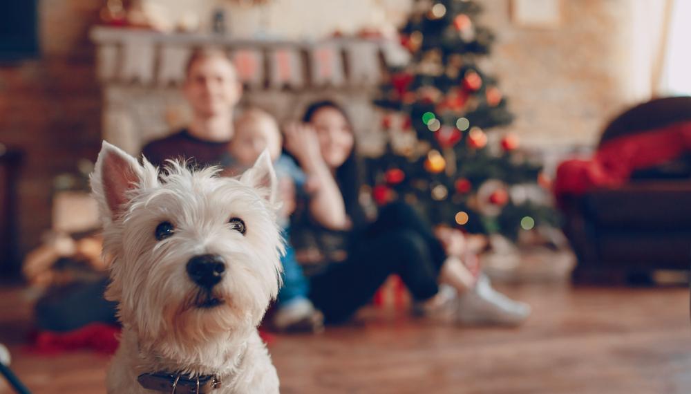 prezent dla miłośnika psów