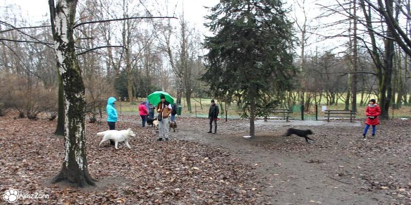VII grudniowe spotkanie na wybiegu dla psów w parku śląskim