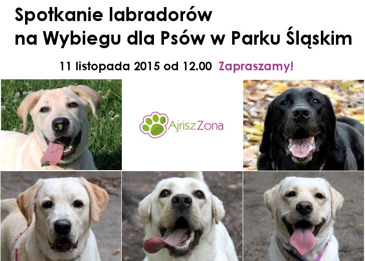 III jesienne spotkanie labradorów na Wybiegu dla Psów w Parku Śląskim