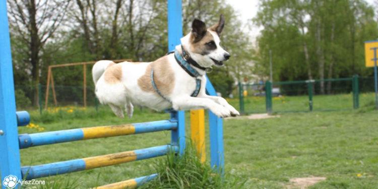 Psi park w Pszczynie