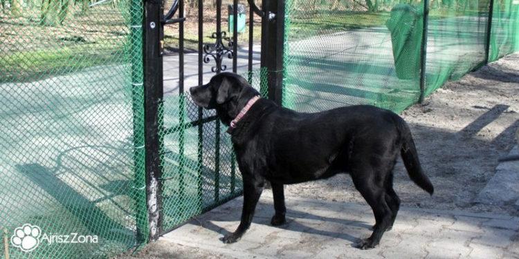 Jak korzystać z wybiegu dla psów