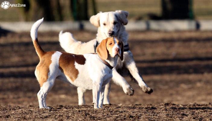Co warto wiedzieć przed wizytą w parku dla psów