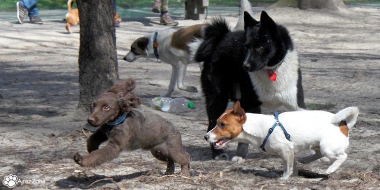 park dla psów