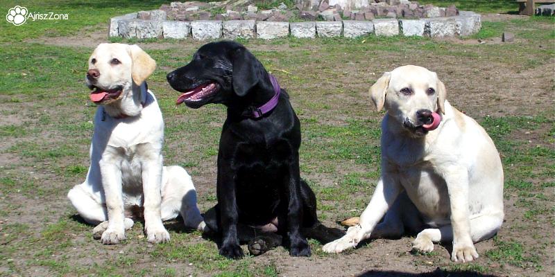 Pamiętniki Ajrisz #04 W przedszkolu dla psów