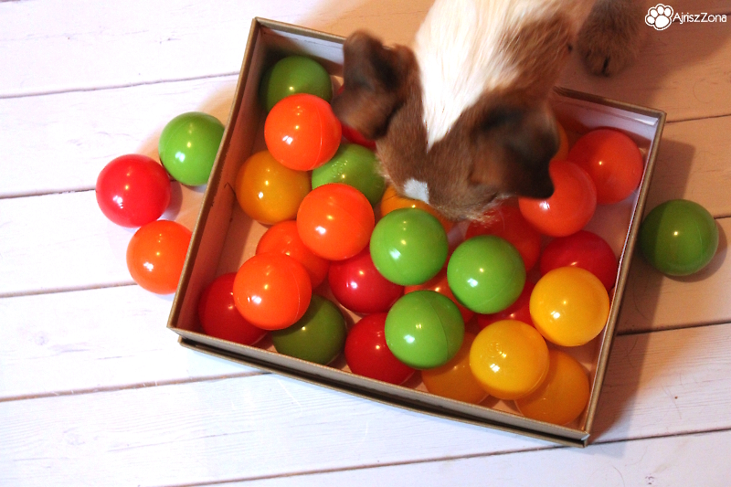 zabawy węchowe dla psa