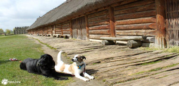 Muzeum Archeologiczne w Biskupinie z psem