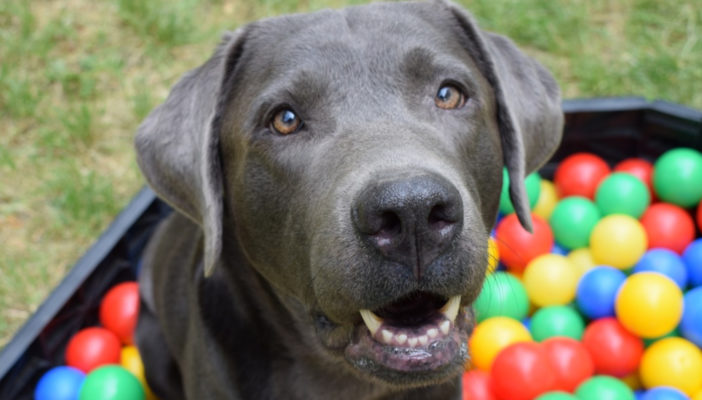 Jak zrobić zabawkę węchową dla psa?