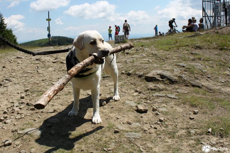 Szyndzielnia z psem