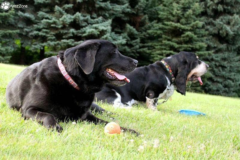 Wyprowadzanie psów Katowice