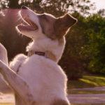 sesja fotograficzna psa