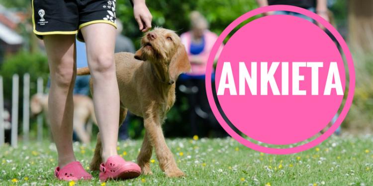 Jak korzystamy z wybiegów dla psów?