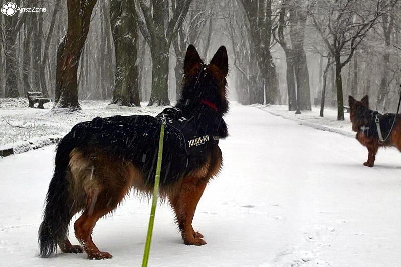 domowa opieka dla psa Katowice