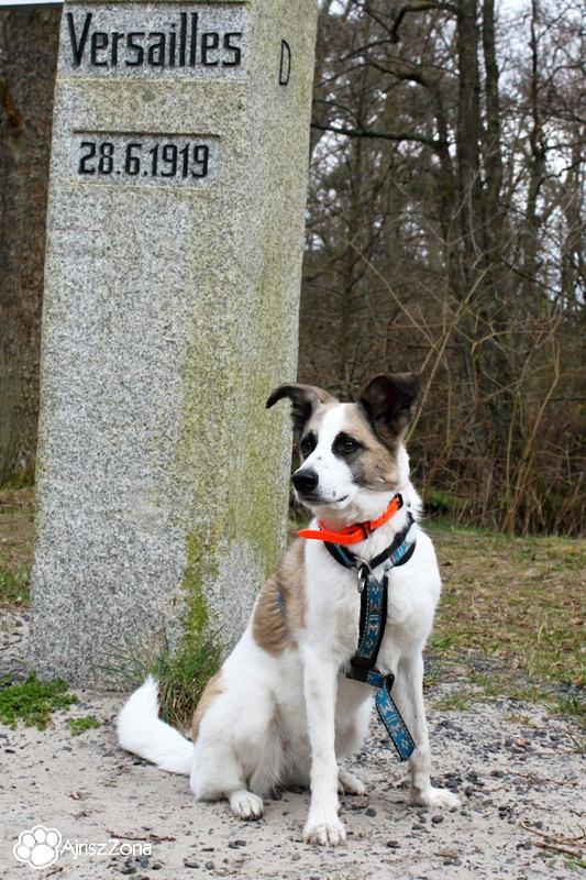 Szlak Historii Militarnej Kaszub Północnych z psem