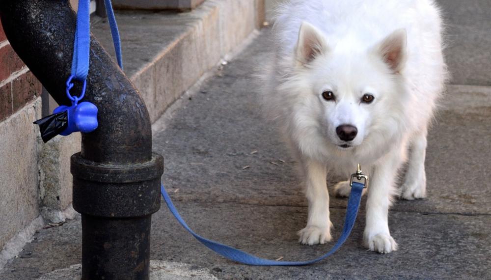 Zostawianie psa pod sklepem