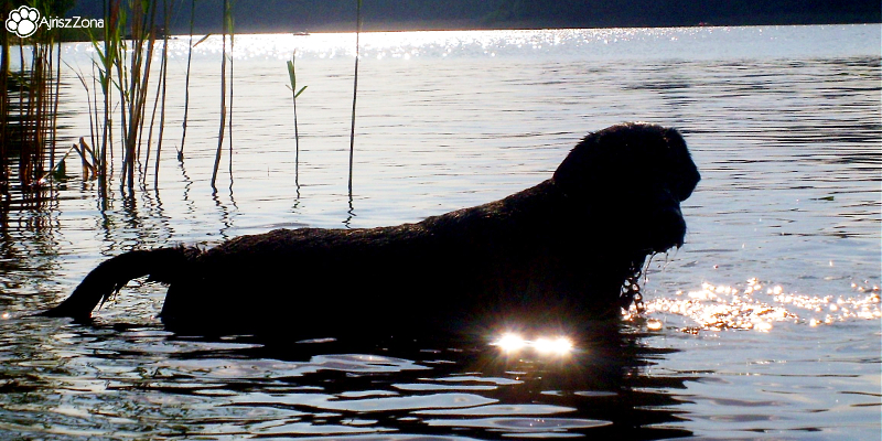 czy można nauczyć psa pływać
