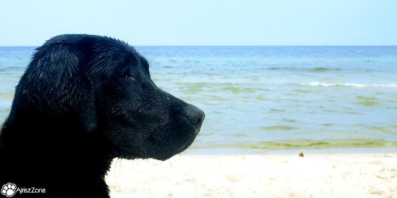 z psem nad morzem