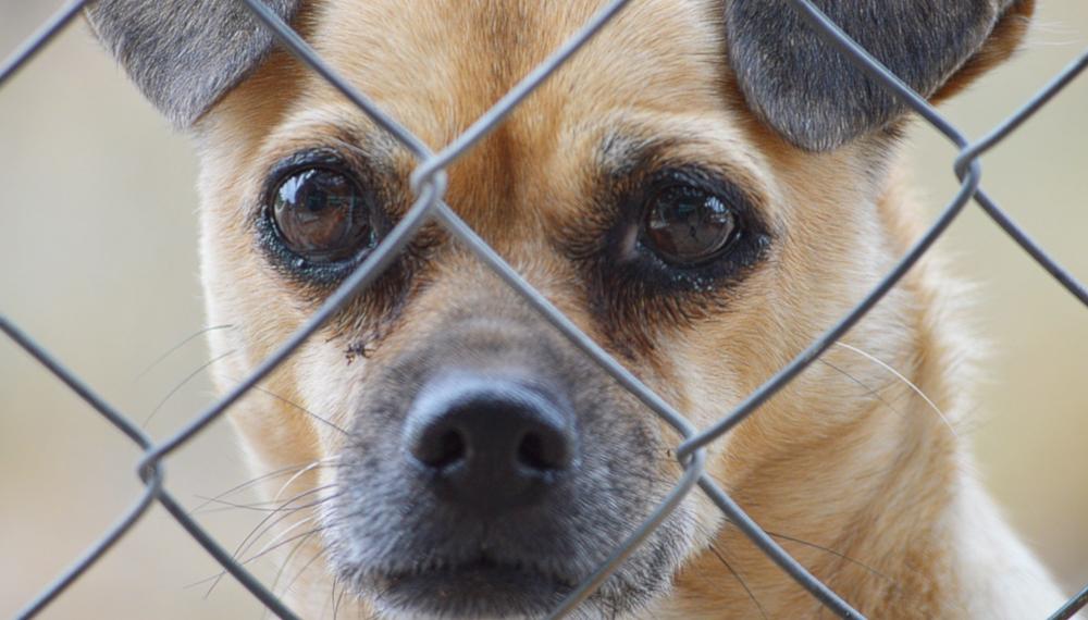 Jak i gdzie zgłosić złe traktowanie psa?