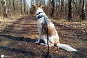Gdzie na spacer z psem na Śląsku