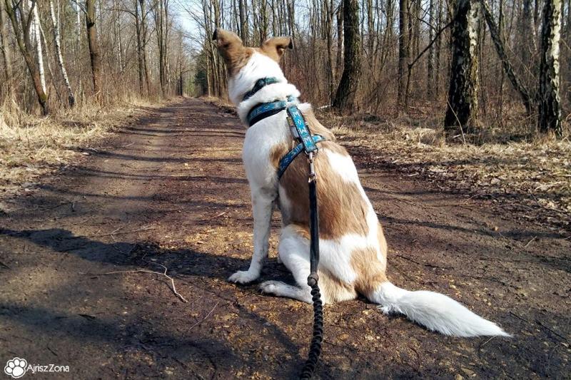 Spacery z psem nad Zalewem Sosina