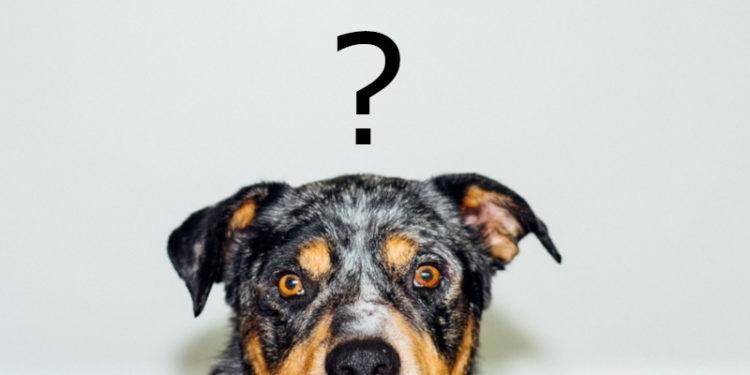 skąd brać zdjęcia na blog o psach