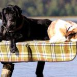 Mazury z psem