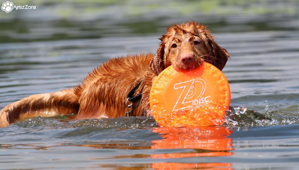 Gdzie nad wodę z psem śląsk