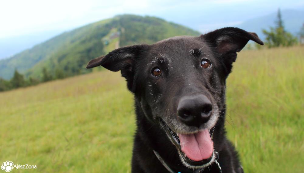 Szyndzielnia i Klimczok z psem - jednodniowa wycieczka w Beskidy