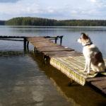 Mazury z psem Puszcza Piska