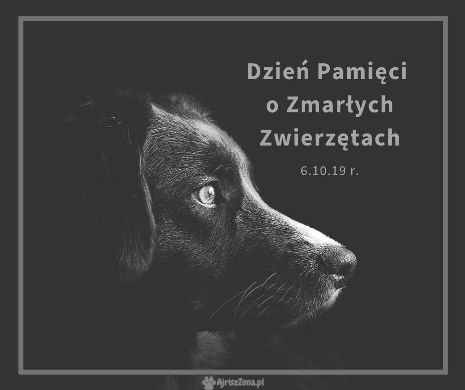 Dzień Pamięci o Zmarłych Zwierzętach - Zwierzęce Zaduszki 2019 r.