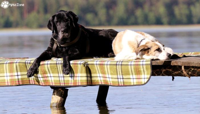 Mazury z psem – Puszcza Piska