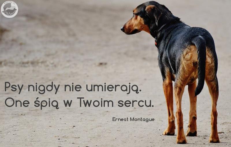 Dzień Pamięci o Zmarłych Zwierzętach Psy nigdy nie umierają One śpią w Twoim sercu.