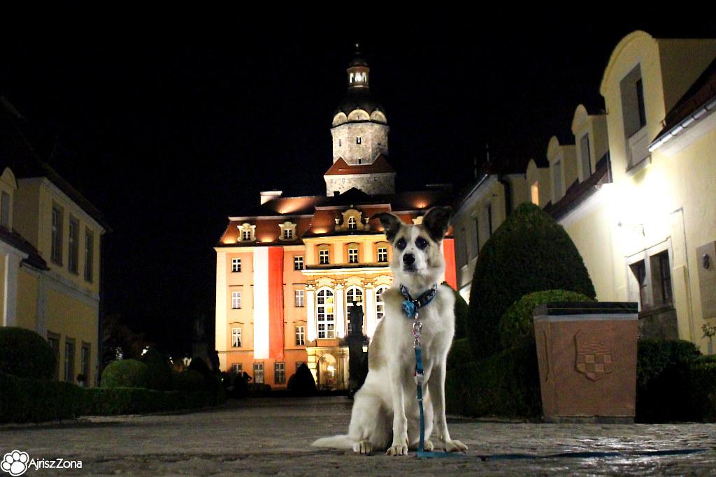 Zamek książ z psem
