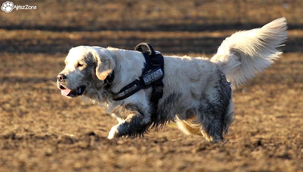 Artykuły o psach