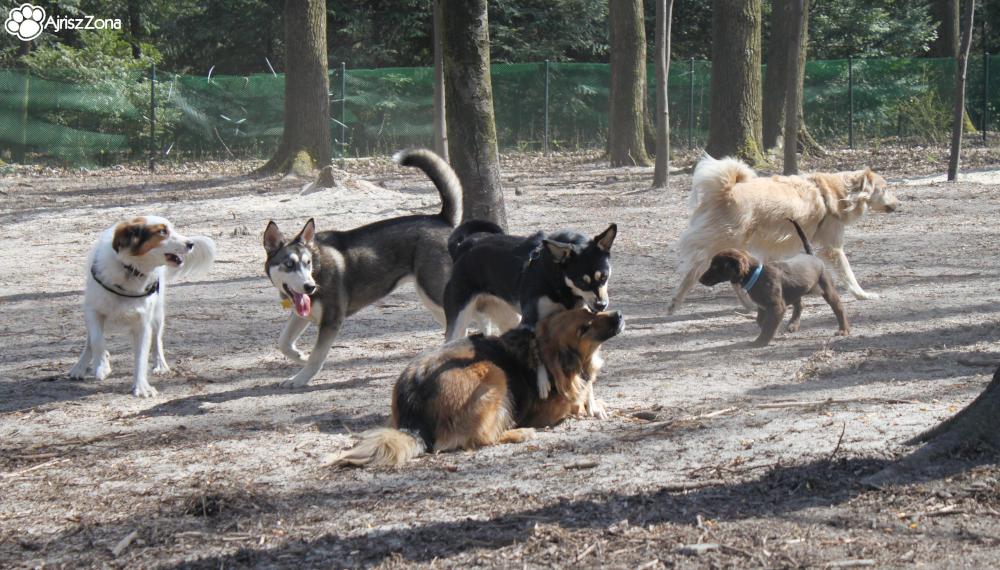 Wybiegi dla psów na Śląsku