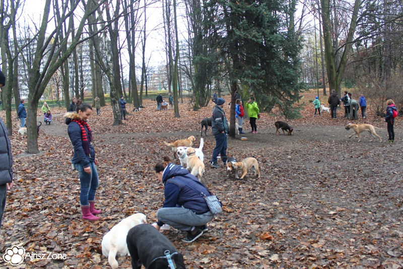 spacery i spotkania na wybiegu dla psów w parku śląskim
