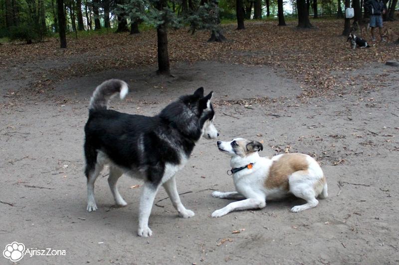 Spotkania i spacery na wybiegu dla psów