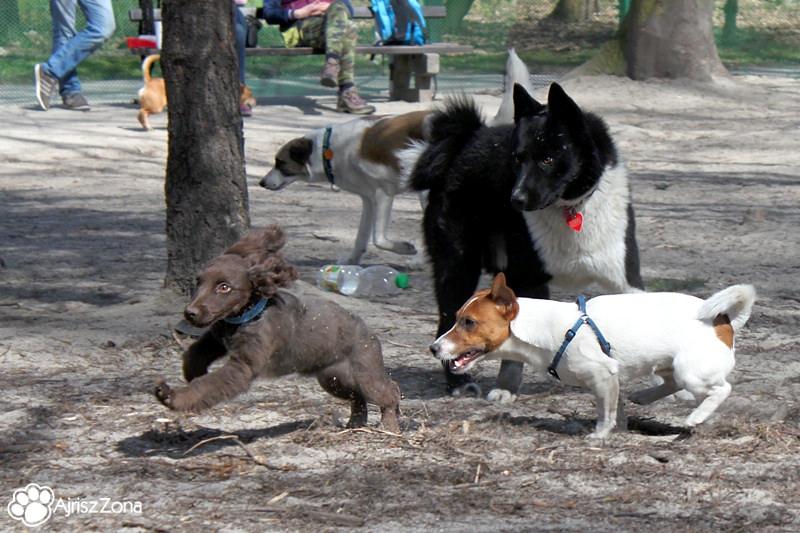 Spotkania i spacery na wybiegu dla psów w Parku Śląskim