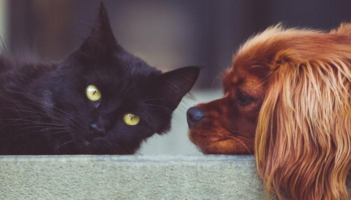 Znęcanie się nad zwierzętami - pomoc prawna
